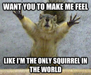 only squirrel in the world