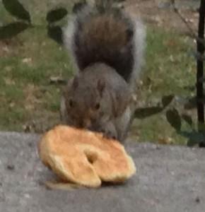 croissant-squirrel